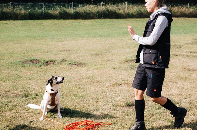 Grundsignale, Hundecaoching